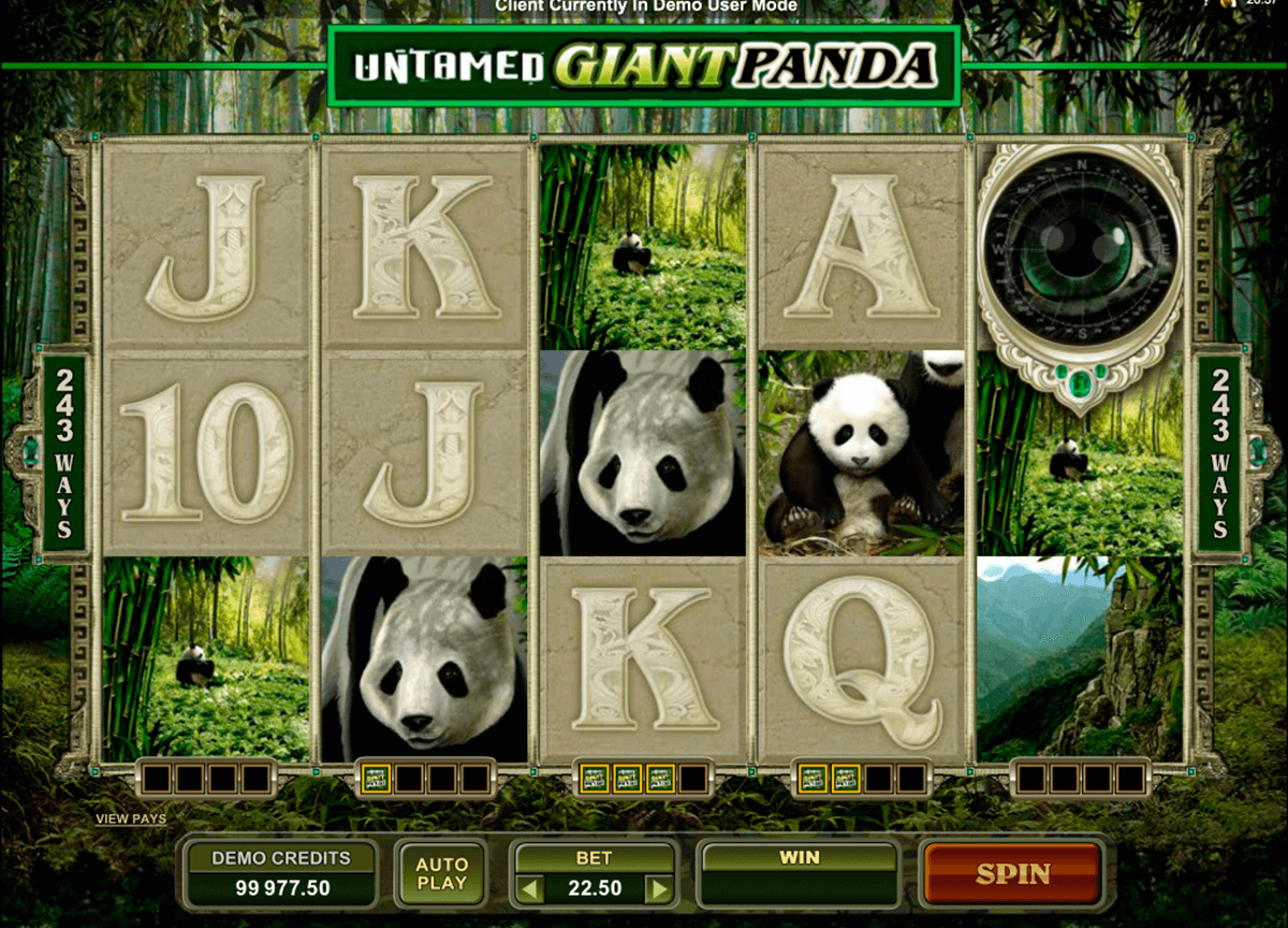untamed giant panda microgaming casinospil online